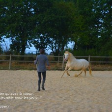 relation homme/cheval