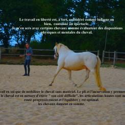 liberté cheval