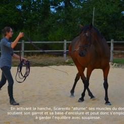 équilibre du cheval