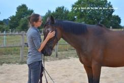 relation avec le cheval