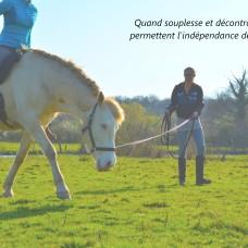 décontraction du cheval