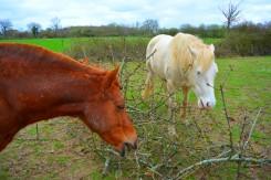 alimentation variée du cheval