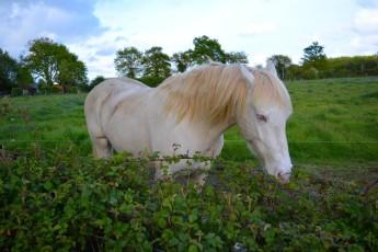 alimentation naturelle du cheval
