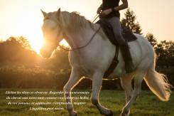 union avec le cheval