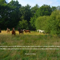 troupeau marco